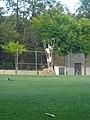 Projecció de l'atleta mediterrani P1490121.jpg