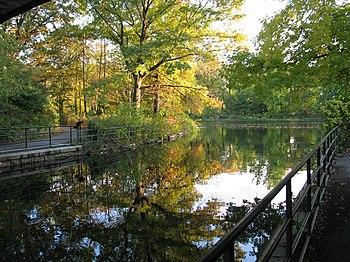 Русский: флора Проспект Парка отражается в вод...