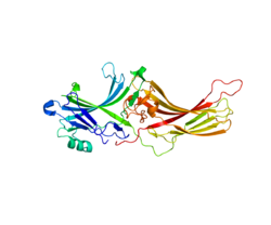 Protein ARR3 PDB 1XEH.png