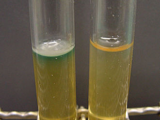 Pseudomonas aeruginosa - Production of pyocyanin, water-soluble green pigment of P. aeruginosa (left tube)