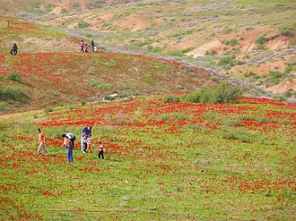 Society for the Protection of Nature in Israel - Family hiking in field of anemones, a protected flower species in Israel, Pura Nature Reserve