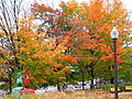 Quebec city foliage 2.jpg