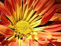 Radiating joy! (499361217).jpg