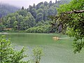 Relaxing lake view.jpg