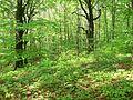 Rezerwat Ostra Góra Polska 22.jpg
