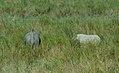 Rhino & Elephant at Kaziranga National Park.jpg
