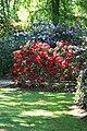 Rhododendronpark Bremen 20090513 025.JPG