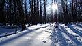 Ricketts Glen State Park winter hike 15 (43427960380).jpg