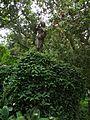 Rio de Janeiro Botanical Garden (004).jpg