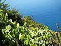 Riomaggiore 391-park 02.jpg