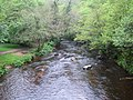 River Teign at Fingle Bridge - geograph.org.uk - 438961.jpg