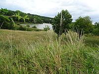 Rivièrette.JPG
