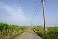 Road - Kohama-jima, Okinawa.jpg