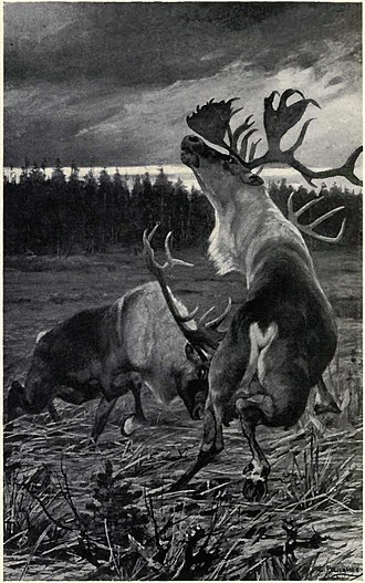 Carl Rungius - Roaring in a frenzy, the older bull upreared, wavered, and crashed backwards