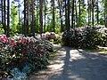 """Rododendru selekcijas un izmēģinājumu audzētava """"Babīte"""" - panoramio (1).jpg"""
