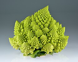 Romanesco broccoli (Brassica oleracea).jpg