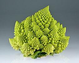 Chou romanesco, variété de chou-fleur à l'aspect décoratif dû à sa phyllotaxie régulière. (définition réelle 5000×4000)