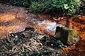 Rombergpark-100331-11478-Bachlauf.jpg
