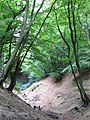 Rope swings in Jelleys Hollow - geograph.org.uk - 1504708.jpg
