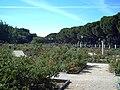 Rosaleda del Parque del Oeste (Madrid) 04.jpg