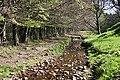 Rosarie Burn - geograph.org.uk - 415365.jpg