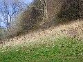Rough grazing near Shermel Gate - geograph.org.uk - 1219994.jpg