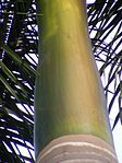 Royal Palm Leaf Sheath.jpg