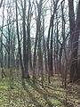 Ruiny Dworu w Bartodziejach - 16.JPG