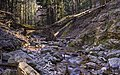 Ruisseau du Vialais - March 2021 - A.jpg