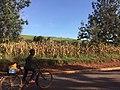 Rwandan boy on bicycle (Rwinkwavu, Feb. 2020).jpg