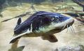 Särkänniemi - fish 6.jpg