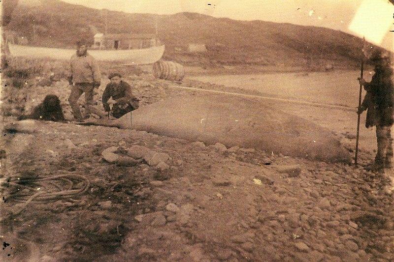 File:S-Georgien 1882 41.jpg