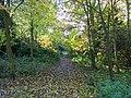 SNIBSTON woodland.jpg