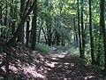 Sachsenburgen Weg zur Oberburg - panoramio.jpg