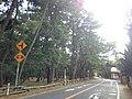 Saga Prefectural Road No.347 and Niji Pine Grove (east).jpg