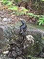 Salamander20210625095434.jpg