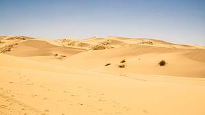Samalayuca Dune Fields - Samalayuca Dunes