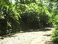 San basilio de palenque - panoramio (3).jpg