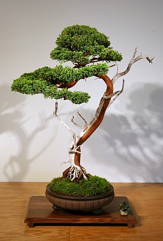 Nanga (Japanese painting) - Sargent Juniper arranged in the bunjin style