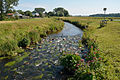 Schleswig-Holstein, Winseldorf, FFH-Gebiet Rantzau-Tal NIK 5521.JPG