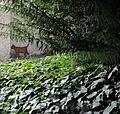 Schroedinger cat.jpg