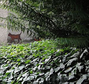 Schrödinger's cat - Life-size cat figure in the garden of Huttenstrasse 9, Zurich, where Erwin Schrödinger lived 1921–1926. Depending on the light conditions, the cat appears either alive or dead.