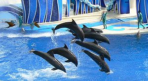 SeaWorld -  Marble, Porter, Jensen, Starbuck, Baretta, and Clyde performing in Blue Horizons at SeaWorld Orlando.