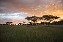Serengeti,Sunset Mbalageti.jpg