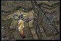 Serpentes (7221892734).jpg