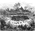 Seven Years in South Africa, page 004, pond near Coetze's farm.jpg