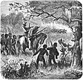 Seven Years in South Africa, page 409, lioness attacking cattle on the Tati river.jpg