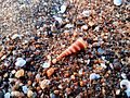 Shells on the beach 2.jpg