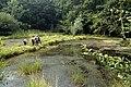 Shotgate pond in the nineties - geograph.org.uk - 1514844.jpg