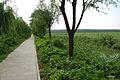 Shunyi, Beijing, China - panoramio - jetsun (13).jpg